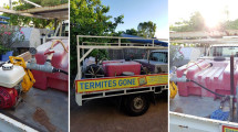 termites-gone-4