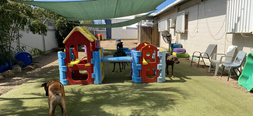 Doggy Day Care & Grooming – Townsville