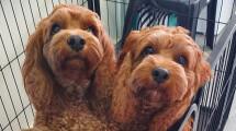 Dog Grooming Salon – Townsville
